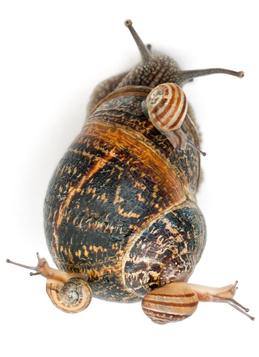 Bug-N-Sluggo hero image